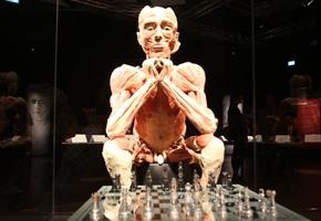Körperwelten: Endspurt bei der Ausstellung in Osnabrück