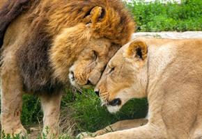 Valentinstag im Zoo: ''Tour d'Amour'' durch die Tierwelt