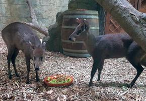 ''Tierische'' Veränderungen im Zoo