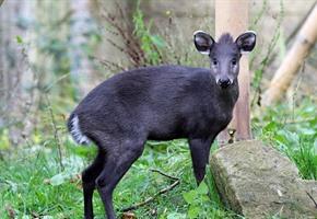 Klausi ist die Vorhut: Viele Neuzugänge im Zoo