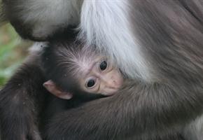 Zoo trauert um Affenkind