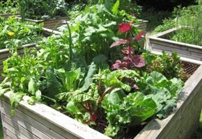 Ernten und Genießen: Familienfreundlicher Gartenworkshop