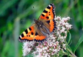Jetzt bewerben: Naturschutzpreis für Insekten-Projekte